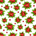 Christmas pattern with red poinsettia and holly leaves and berri Royalty Free Stock Photo