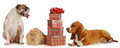 Christmas pets Royalty Free Stock Photo