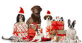 Christmas pets different dogs rabbits and a cat with decoration isolated on white Royalty Free Stock Images