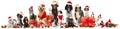 Christmas pets many isolated on white Stock Image