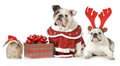 Christmas pets three dressed up for isolated on white background Stock Images
