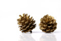 Christmas pine cones resting on a white background the table Stock Image