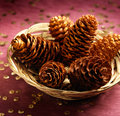 The Christmas Pines Royalty Free Stock Image