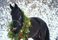 Christmas portrait of black beautiful horse Royalty Free Stock Photo