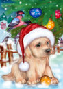 Christmas Puppy Stock Photos
