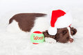 Christmas puppy sleeping with ball cute little wearing a santa hat laying next to a green and red tennis the word woof Royalty Free Stock Photography