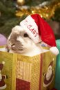 Christmas rabbit Royalty Free Stock Photo