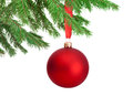 Christmas red ball hanging on a fir tree branch isolated white background Stock Photos