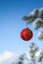 Christmas red bauble on pine tree sparkling snow covered Stock Photos