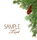 Christmas Rustic Image of Pine Tree Stems and a Pi Stock Images