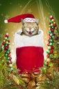 Christmas Stocking Cat