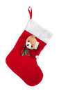 Christmas stocking isolated Royalty Free Stock Photo