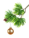 Christmas toy on fir tree branch isolated Royalty Free Stock Photography