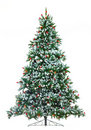 Christmas Tree. Royalty Free Stock Image