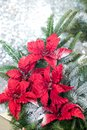 Christmas tree background and Christmas decorations with snow, blurred, sparking, glowing. Happy New Year and Xmas theme Royalty Free Stock Photo