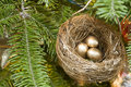 Christmas Tree Birds Nest Royalty Free Stock Image