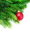 Christmas tree branch isolated on white background with red baub bauble evergreen border close up natural Stock Photo