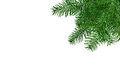 Christmas tree branches isolated over white Royalty Free Stock Photo
