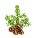 Christmas tree branches white background Pine sprig spruces Royalty Free Stock Photo