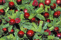 Christmas-tree decorations on a christmas tree Stock Photography