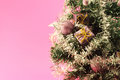 Christmas tree with decorations on pink background detail of a decorated conceptual image about Royalty Free Stock Images
