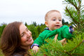 Christmas Tree Farm Portraits Royalty Free Stock Photo