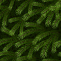 Christmas tree fir branch seamless background Royalty Free Stock Photo