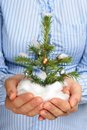Christmas tree in hands. Royalty Free Stock Photo