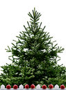 Christmas tree isolated on the white background Stock Image