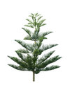 Christmas tree isolated on white background Royalty Free Stock Photo