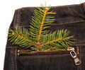 Christmas tree in jeans pocket Stock Photography