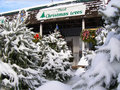 Christmas Tree Lot Royalty Free Stock Image