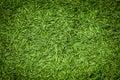 Christmas Tree Needles Background