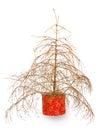 Christmas tree without needles Royalty Free Stock Photo