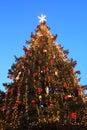 Christmas tree outdoor Stock Photos