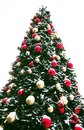 Christmas tree outdoor huge new year fir decorated by balls in snow over white background Royalty Free Stock Photography