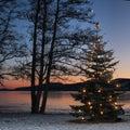 Christmas Tree Outdoor