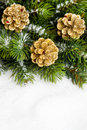 Christmas tree with pinecone Royalty Free Stock Images