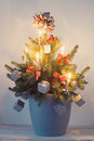 Christmas tree in plant pot Stock Photos