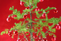 Christmas tree with red decor Royalty Free Stock Photos