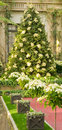 Christmas Tree Scene Royalty Free Stock Photography