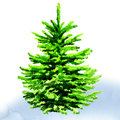 Christmas tree watercolor painting on white background Stock Images
