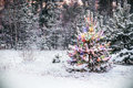 Christmas tree in winter forest with colored lights Royalty Free Stock Photo