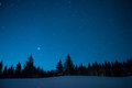 Christmas trees on the background of the starry winter sky. Prio Royalty Free Stock Photo