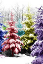 Christmas Trees Colorized Royalty Free Stock Photography