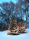 Christmas trees in Minnesota vertical view Royalty Free Stock Photo