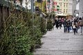 Christmas trees on sale and passing people at Market in Cologne Royalty Free Stock Photo