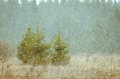 Christmas trees in a snowstorm Royalty Free Stock Photo