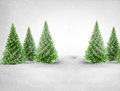Christmas trees in snowy landscape green pine Royalty Free Stock Photo