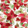 Christmas Winter Poinsettia Flowers Seamless Background, Floral Pattern Print Royalty Free Stock Photo